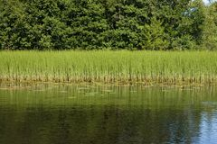 Lato dell'erba del lago forest Fotografia Stock