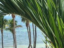 Lato dell'Oceano Atlantico di Key West Florida con le palme immagine stock libera da diritti