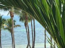 Lato dell'Oceano Atlantico di Key West Florida con le palme fotografia stock