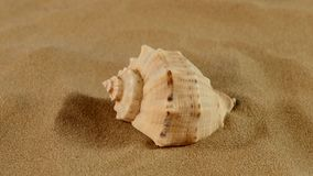Lato della conchiglia marina usuale sulla sabbia, rotazione stock footage