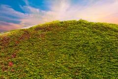 Lato della copertura della vite e tetto di un buidling Fotografia Stock