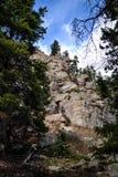 Lato della montagna con gli alberi Fotografia Stock
