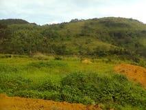 lato della piantagione di tè Immagine Stock Libera da Diritti