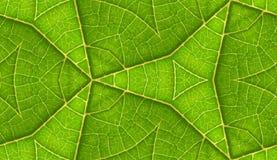 Lato della priorità bassa senza giunte delle mattonelle del foglio verde Immagini Stock Libere da Diritti