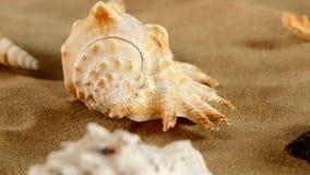 Lato delle stelle marine differenti dello shellsand del mare sulla spiaggia archivi video
