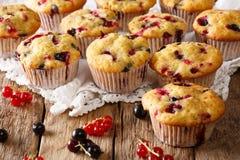 Lato deser: muffins z jagodową mieszanką rodzynku zakończenie H Zdjęcie Stock