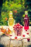Lato deseru ogródu owocowi agrestowi kolorowi napoje Zdjęcia Stock