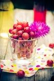 Lato deseru ogródu owocowi agrestowi kolorowi napoje Zdjęcia Royalty Free