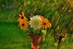 Lato deszcz Fotografia Royalty Free