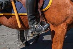 Lato di bello cavallo marrone con gli stivali da equitazione della polizia in staffa immagini stock libere da diritti