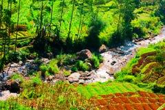 Lato di Undakan delle sorgenti del fiume di Citarum fotografia stock libera da diritti