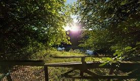 Lato dnia jezioro i drzewa Obrazy Stock