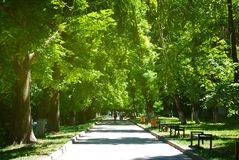 Lato drogi zieleni drzew Parkowy spacer Relaksuje Zdrowego sporta czas zdjęcie stock
