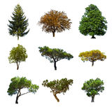 Lato drzewa Zdjęcie Stock