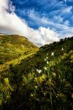 Lato góry krajobraz z kwitnąć dzikich białych narcyzów kwiaty i błękitnego chmurnego niebo, pionowo podróży tło zdjęcia royalty free