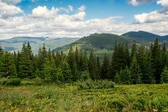 Lato góry, zielona trawa i niebieskie niebo krajobraz, Obrazy Stock