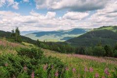 Lato góry, zielona trawa i niebieskie niebo krajobraz, Obraz Royalty Free
