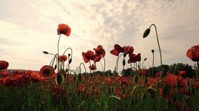 Lato i wiosna, krajobraz, makowy ziarno Obraz Stock