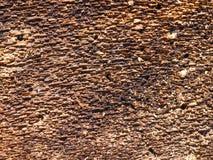 Lato interno della corteccia di albero Fotografie Stock