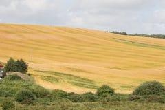 Lato irlandzka sceneria Obraz Royalty Free