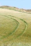 Lato irlandzka sceneria Zdjęcie Royalty Free