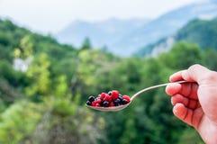 Lato jagodowe owoc Zdjęcia Stock