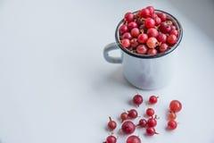 Lato jagody w białej filiżance z czerwonym agrestem na białym tle agrestowa czerwień, świeże dojrzałe jagody, zdrowy jedzenie Obrazy Stock