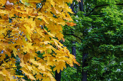 Lato jesieni spotkanie Obraz Royalty Free