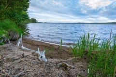 Lato jeziora wybrzeże w Szwecja Obraz Royalty Free