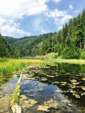 Lato jezioro zdjęcia royalty free