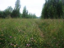Lato jungfrau Młody las zdjęcie royalty free
