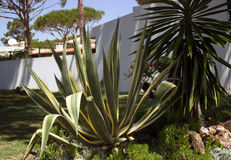 Lato kaktusy Fotografia Royalty Free