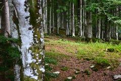 Lato kończy i lasy zaczynają barwić z jesienią Fotografia Stock