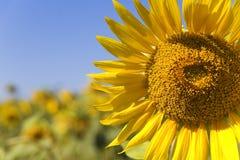 lato kolor żółty Zdjęcia Stock
