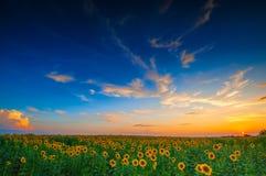 Lato krajobraz Obrazy Stock