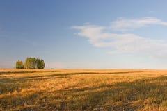 Lato krajobraz zdjęcia royalty free