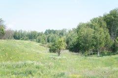 LATO krajobraz Zdjęcie Royalty Free