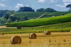 Lato krajobraz blisko Volterra, Tuscany Zdjęcie Stock