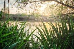 Lato krajobraz na bankach rzeka zdjęcia royalty free