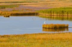 Lato krajobraz na jeziorze z trzcina krzakiem na zmierzchu Zdjęcie Stock