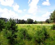 Lato krajobraz, pole z jaskrawymi kwiatami Obrazy Stock