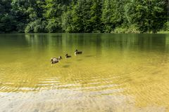 Lato krajobraz przy lasem z lustrzanym odbiciem i jeziorem Obrazy Royalty Free