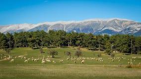 Lato krajobraz trawa i drzewa Fotografia Royalty Free