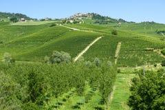 Lato krajobraz w Langhe (Włochy) Obraz Stock