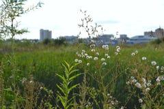 Lato krajobraz w przedmieściach Obraz Royalty Free