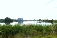 Lato krajobraz w przedmieściach Zdjęcia Royalty Free