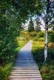 Lato krajobraz z drewnianą drogą przemian zdjęcie stock