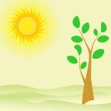 Lato krajobraz z drzewa i zieleni liśćmi Zdjęcia Stock