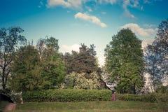 Lato krajobraz z drzewami, żyje ogrodzenie, część drewniany dom i bramę, tonowanie Zdjęcie Stock