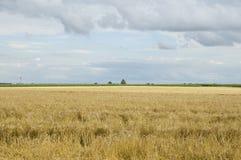 Lato krajobraz z grainfield i błękitnym chmurnym niebem zdjęcie stock